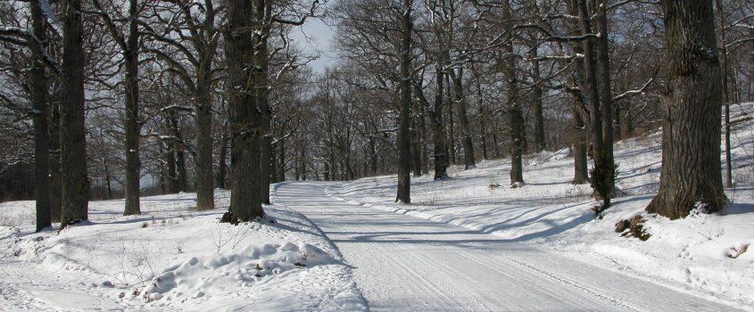 Vinterbild - Ekbacke vid Stenhammar i vinterskrud