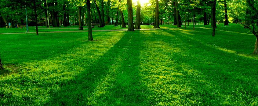 Solen tittar mellan träden i en park