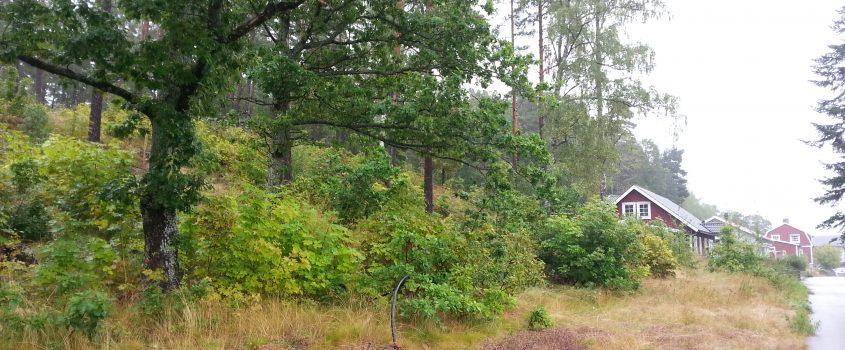 Sluttningstomter på Plevnavägen i Malmköping.
