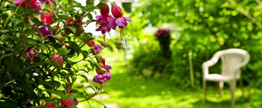 Trädgård med trädgårdsstol och stenlagd gång