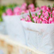 Rosa tulpaner i blomkassar