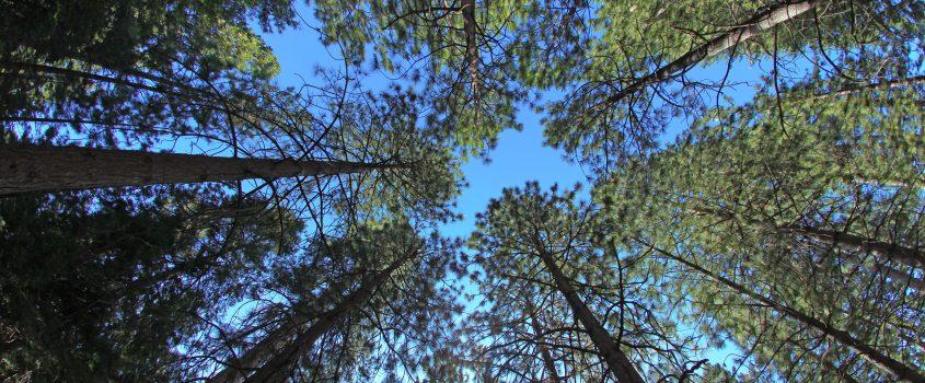 Trädtoppar och blå himmel