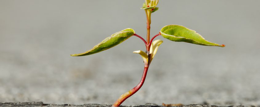 En ensam planta som växer och utvecklas