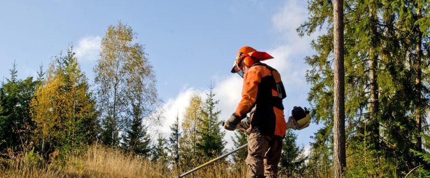 Person som utför skogsarbete