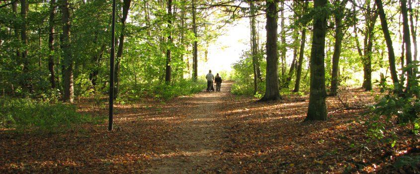 Familj på promenad på en skogsstig