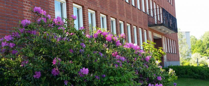 Stadshuset i Flen - del av fasad och blommande buske