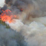 Stor brand i skogsområde på flera hektar, tjock rökutveckling