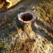 Stubbe av ihåligt nedsågat träd