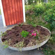 Förstörd blomplantering vid busskur