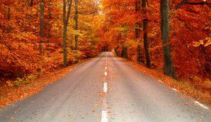Bilden visar en asfaltsväg med omgivande skog i höstfärger, gult, oranget, rött