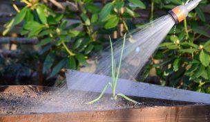 trädgårdsbevattning