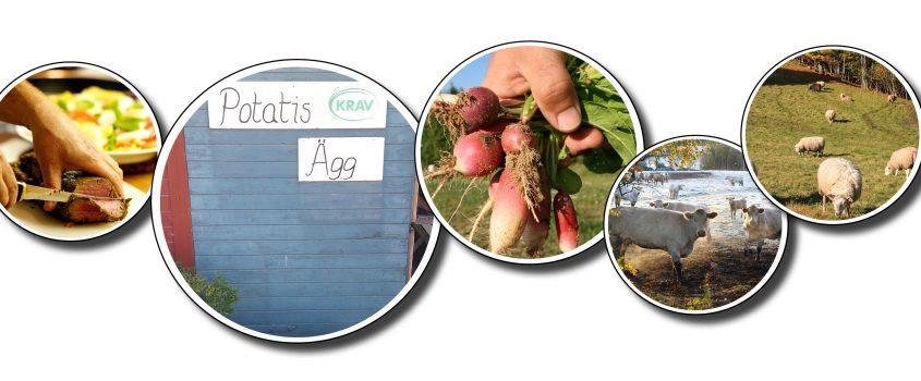 Bildkollage med runda cirklar förställande kor på bete, rädisor i en hand, en blå dörr med skylt: Potatis och ägg, Får i en hage