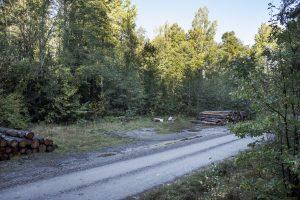 En skogsväg