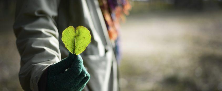 Person håller i ett grönt blad som är format som ett hjärta